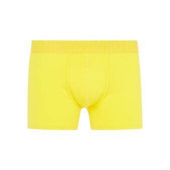 Boxer jaune oreliz yellow.